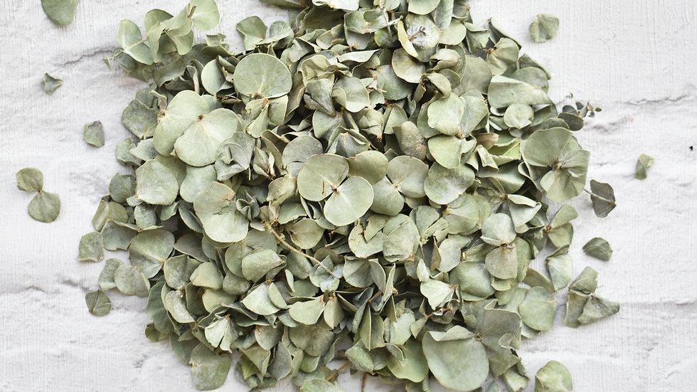 Leaf Confetti | Biodegradable Confetti | Eucalyptus Confetti