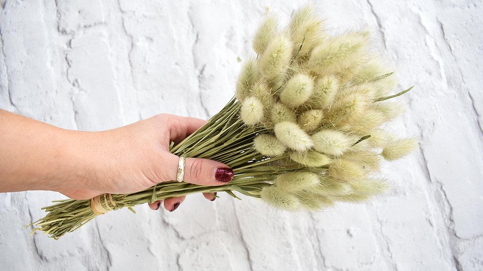 Lagurus Ovatus | Dried Flowers | Dried Flowers how to
