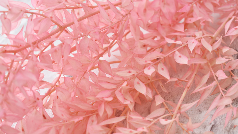 Pink Dried Ruscus | Dried Flowers | Dried Flower Bar UK