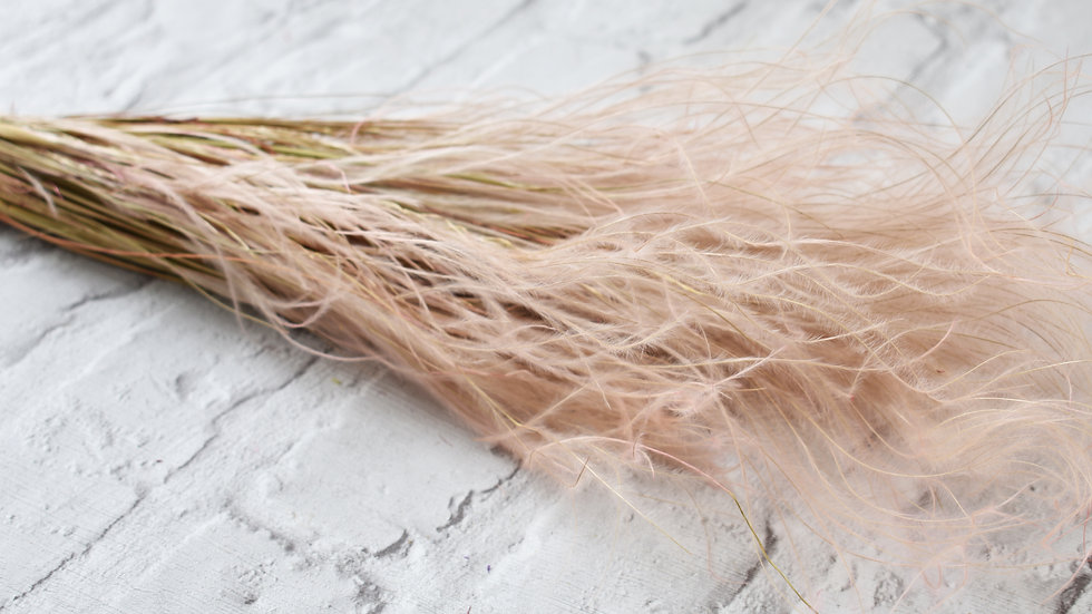 Pink Typha Grass | Dried Flowers | Dried Flower Bar UK