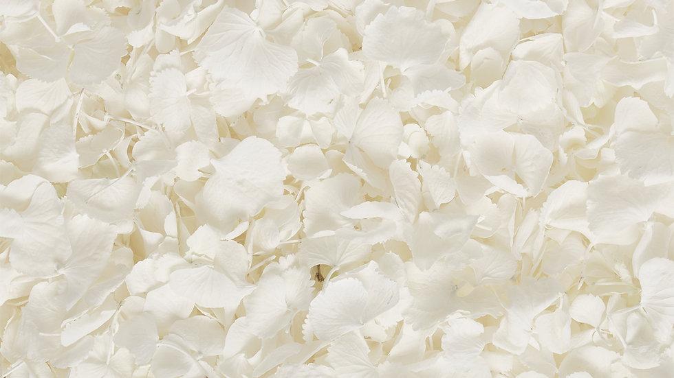 White Lyo Hydrangea Confetti