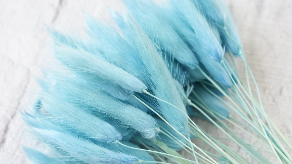 Baby Blue Bunny Tails | Dried Flowers | Dried Flower Bar UK
