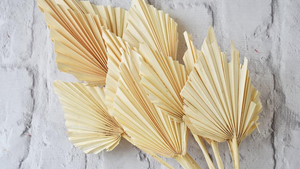 White Palm Spear| Dried Flowers | Dried Flower Bar UK