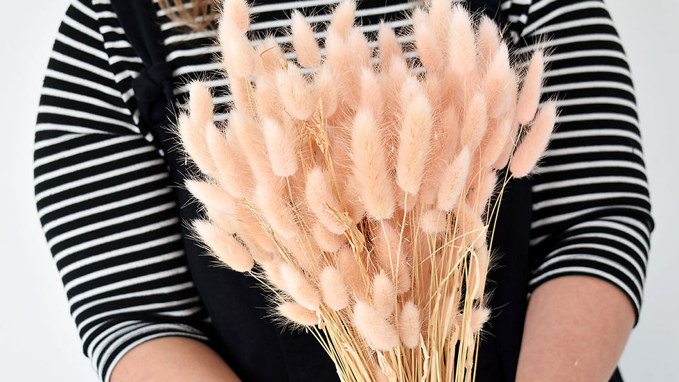 Blush Bunny Tails| Dried Flowers | Bunny Tails Grass
