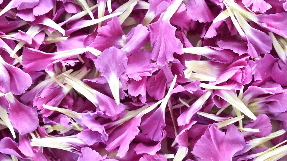 Magenta Carnations | Biodegradable Confetti | Confetti
