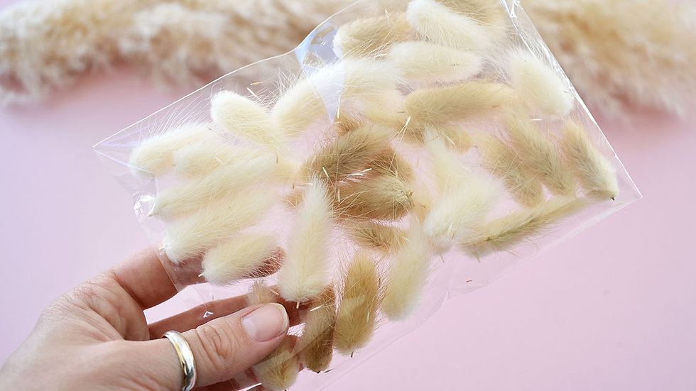 Neutral Bunny Tail Craft Pack   Dried Flowers for crafts   Florist Blackpool