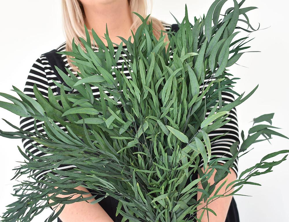 Nicoli Eucalyptus | Dried Flowers | Preserved Eucalyptus