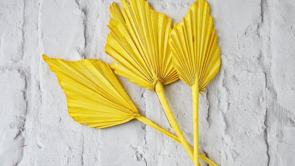 Yellow Palm Spear| Dried Flowers | Dried Flower Bar UK