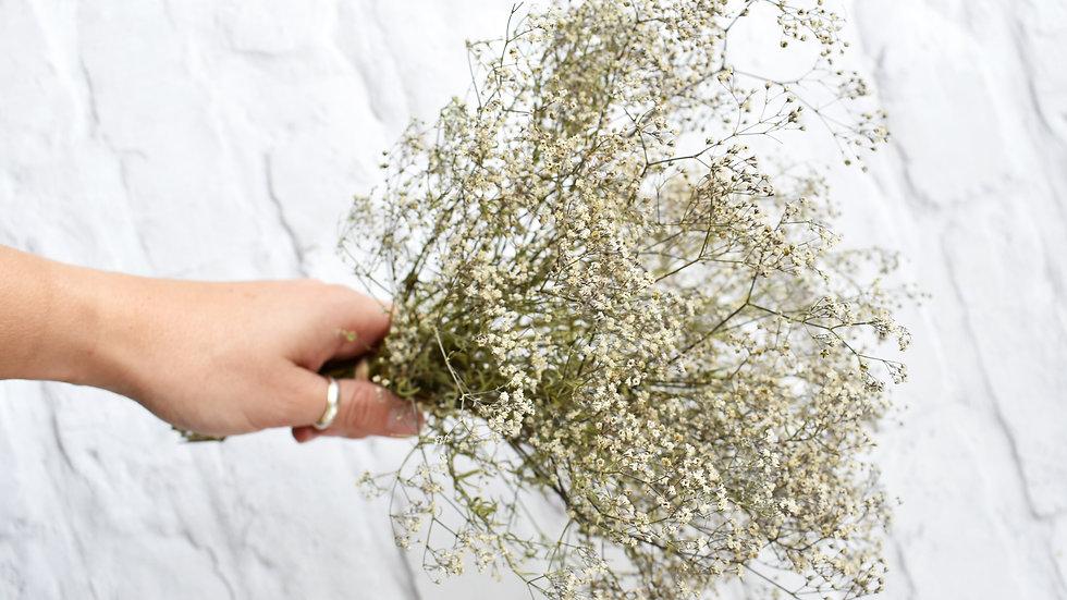 Gypsophila | Dried Flowers | Dried Flower Bar