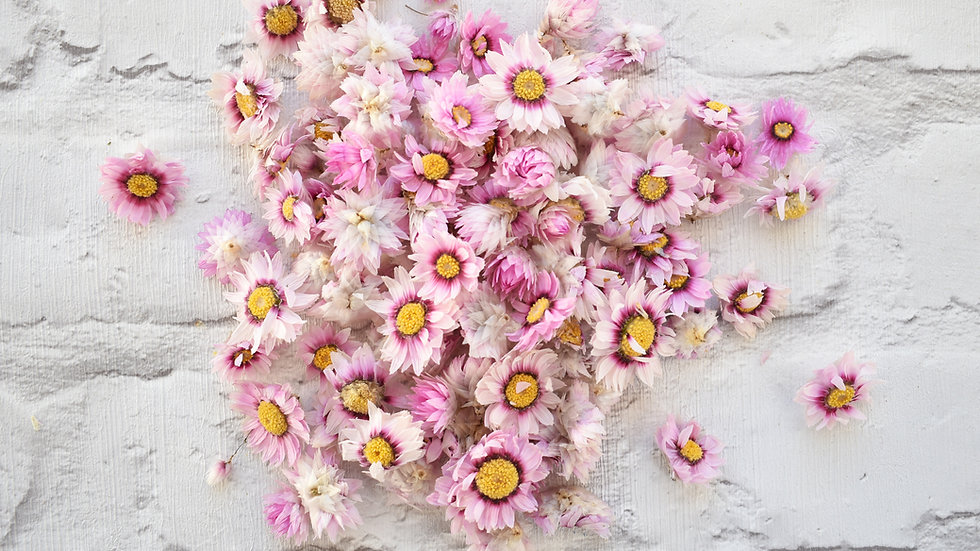 Daisy | Biodegradable Confetti | Air Dried Pink Daisies
