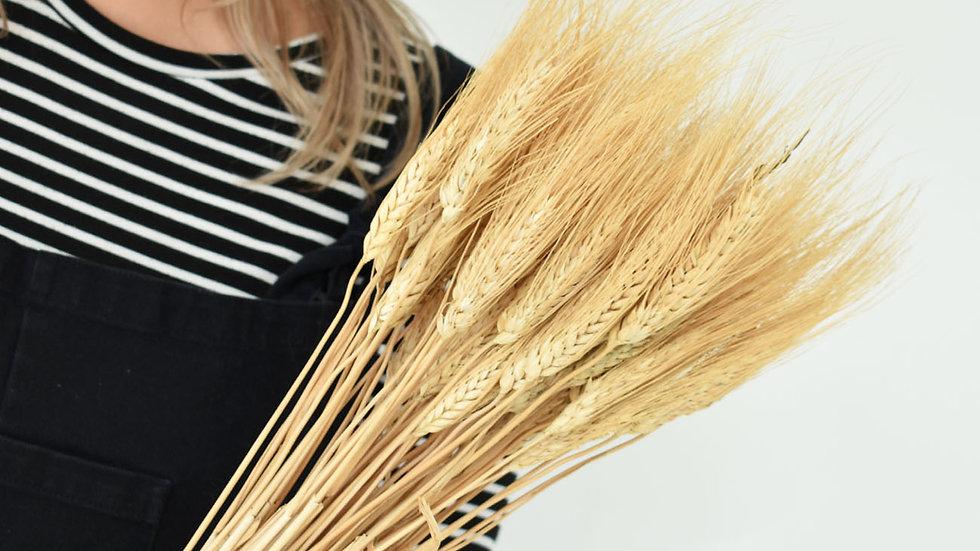 Blonde Bearded Wheat | Dried Flowers | Dried Flower Bar