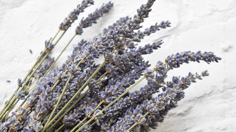 Lavender Bunches | Dried Lavender | Dried Flowers