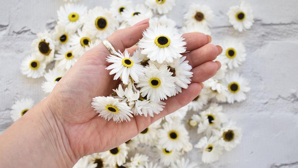 Daisy | Biodegradable Confetti | Wedding Confetti