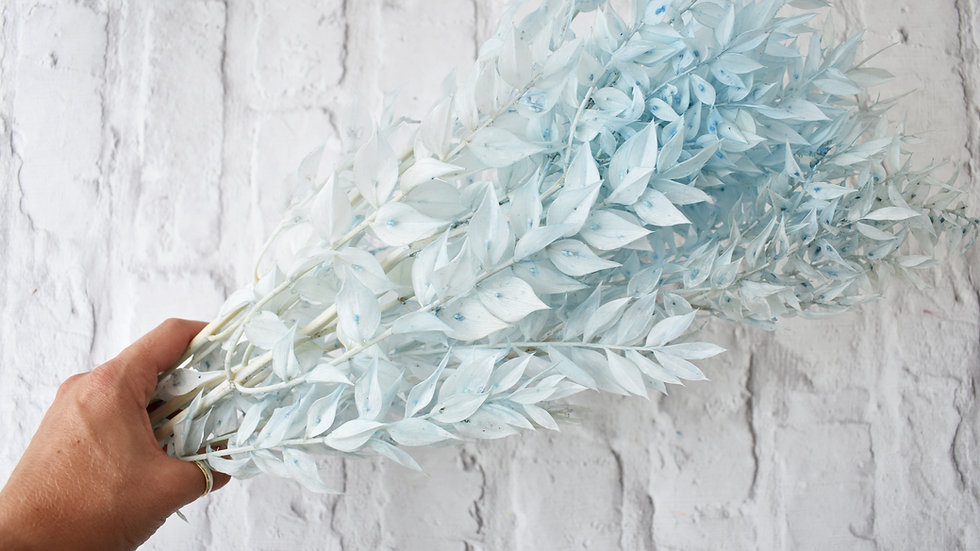Pale Blue Dried Ruscus | Dried Flowers | Dried Flower Bar UK