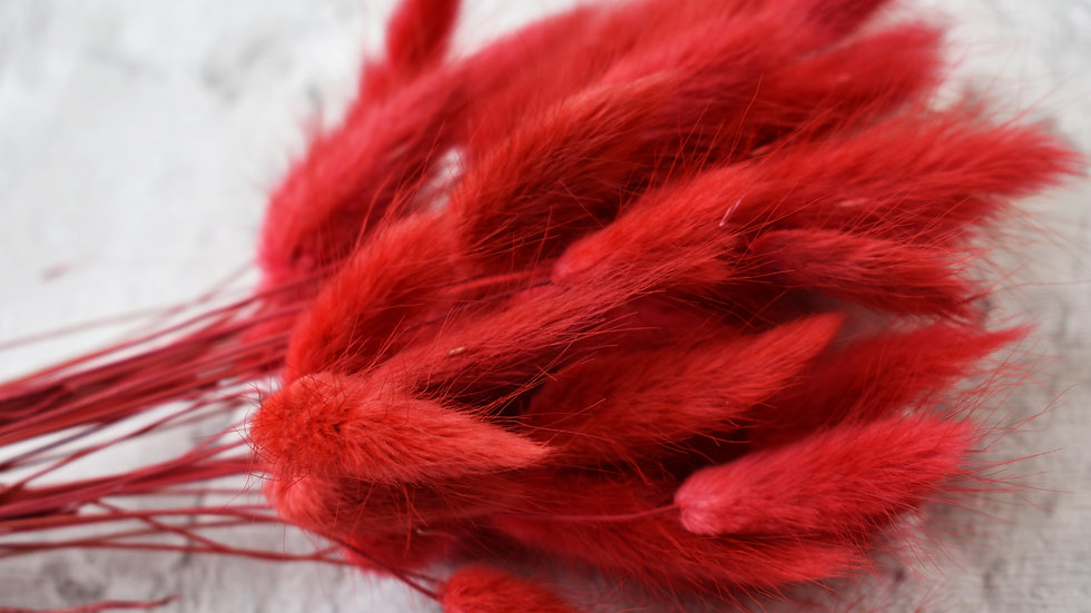 Red Bunny Tails | Dried Flowers | Dried Flower Bar UK