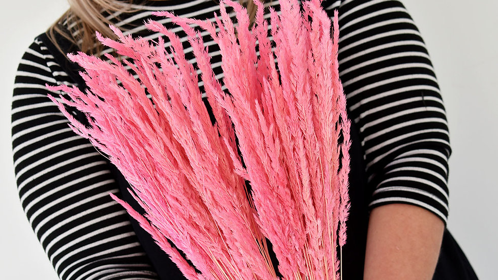 Pink Piumetta Grass | Dried Flowers | Dried Flower for Delivery