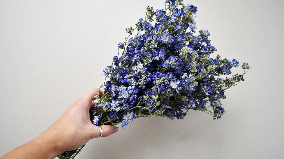Blue Delphinium  Dried Flowers   Blue Dried Flowers