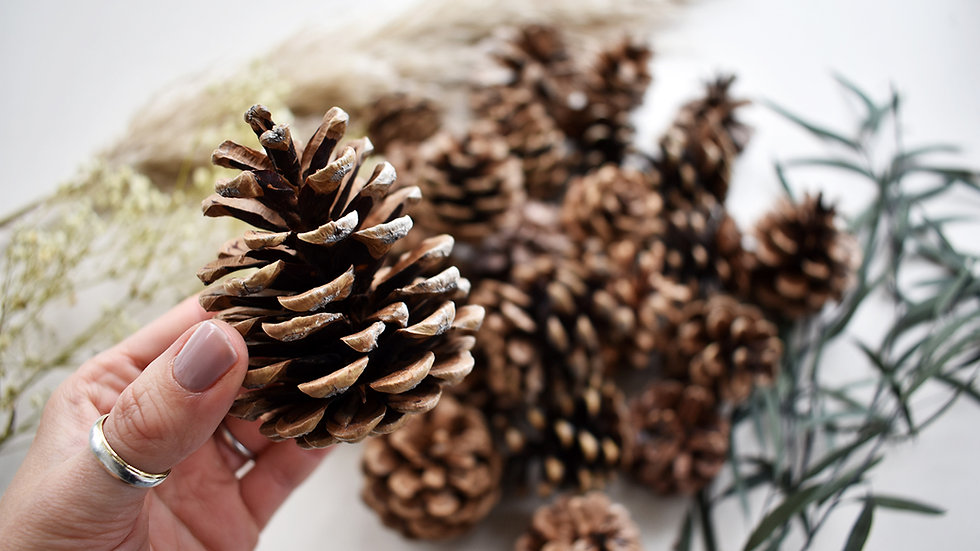 Pine Cones | Pine Cones for Crafts | Christmas Crafts Easy