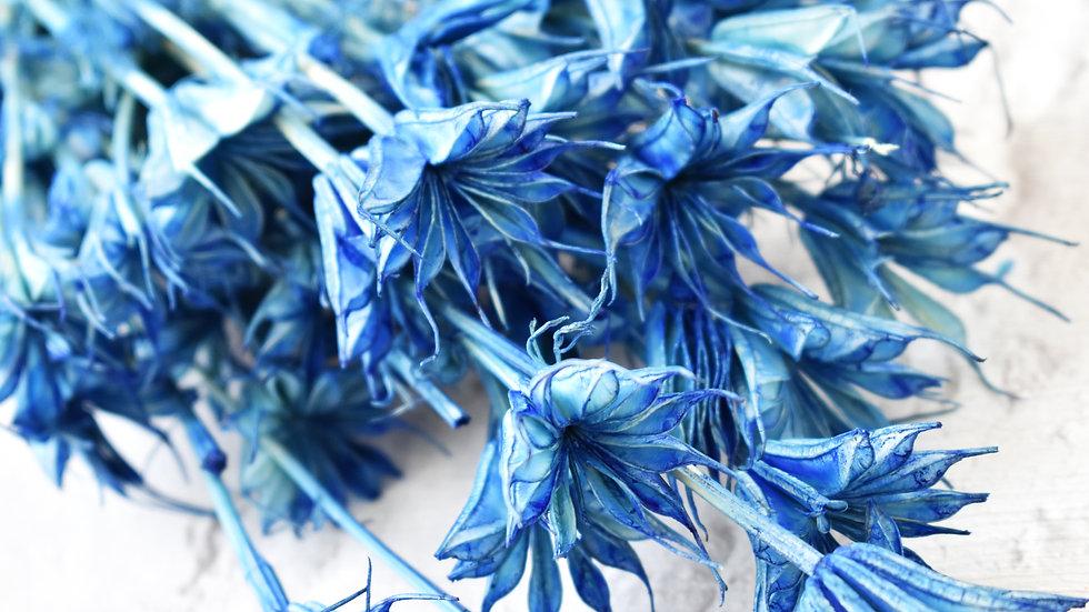 Blue Nigella| Dried Flowers | Dried Flower Bar UK