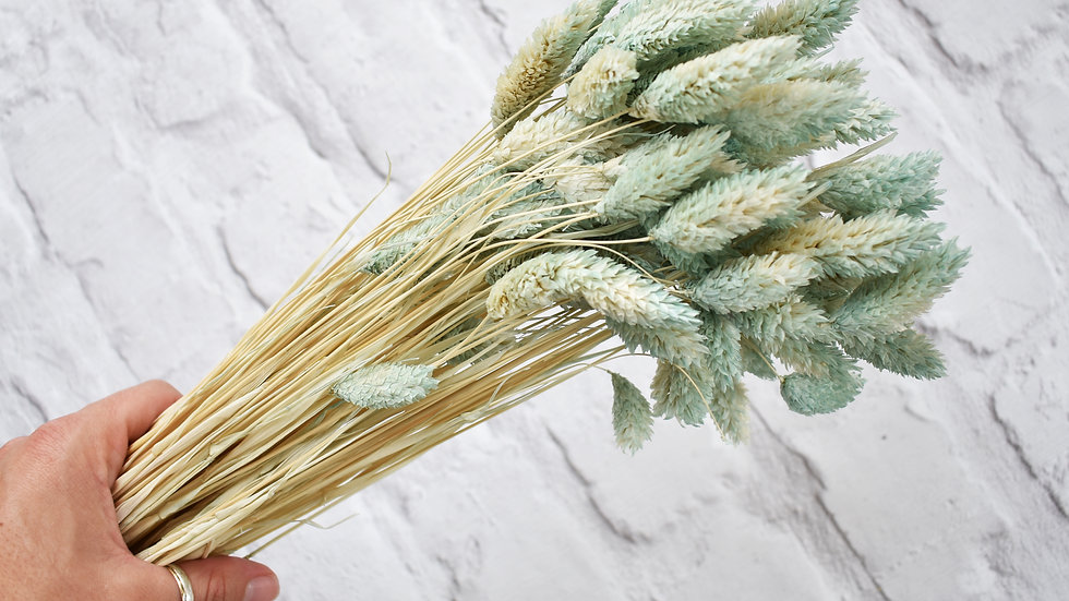 Pastel Green dried phalaris bunch | Dried Flowers | Dried Flower Bar UK