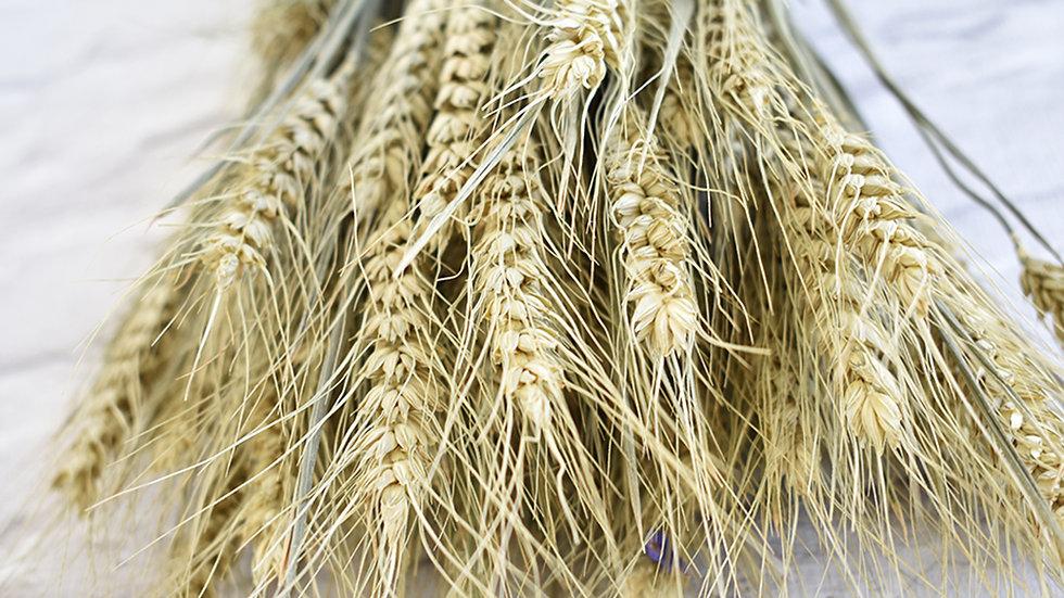 Bearded Wheat | Dried Flowers | Dried Flower Bar