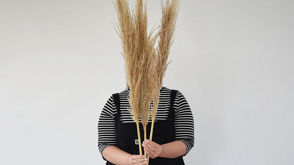 Tall Natural Cortaderia Pampas Grass
