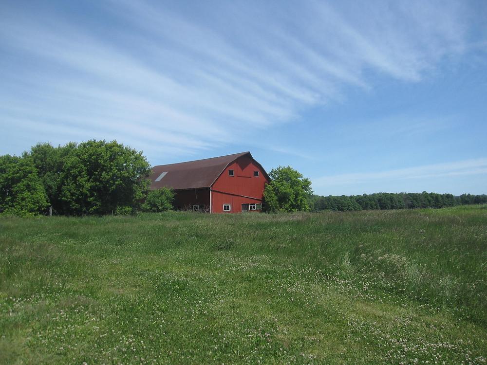 Thistle Ha' farm barn with lush green and a big blue sky