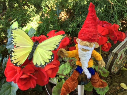 Butterfly gnome.JPG
