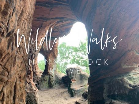 Wildlove Walks - Kinver Edge Circular