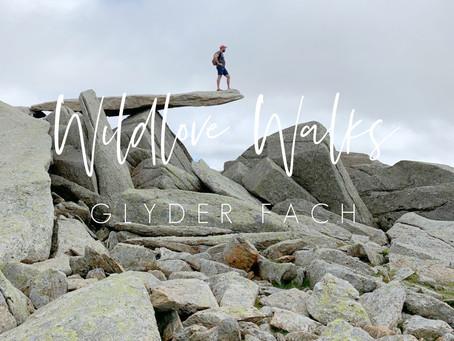 Wildlove Walks - Glyder Fach