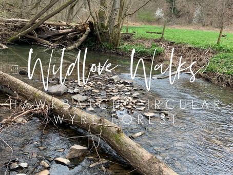 Wildlove Walks - Hawkbatch Circular