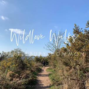 Wildlove Walks - Hartlebury Common