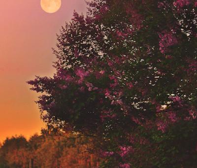 Full Moon Healing Fire