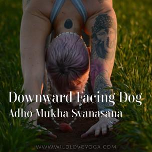 DAY 2 - Downward Facing Dog #wildlove30days