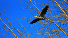 Mark Your Calendars: April 4th - Meet the Herons Event