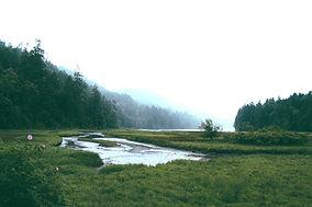Forest Landscape_edited.jpg