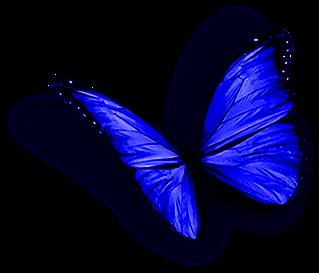 borboleta11_edited.png