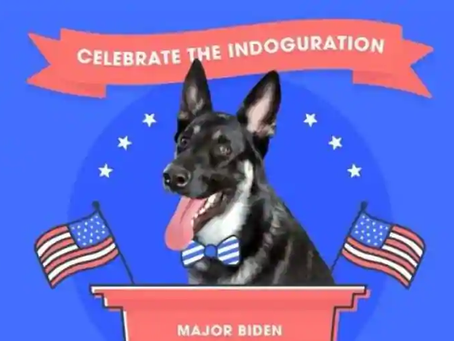 "Biden's dog Major will get his own ""Indoguration"" as White House's first rescue pup"