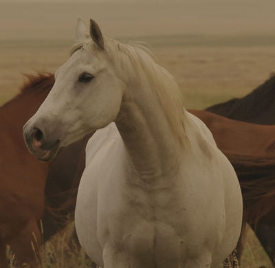Horse 7_edited.jpg