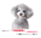 SnapCrab_NoName_2019-6-20_22-46-10_No-00