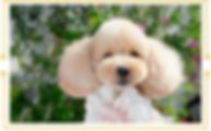 SnapCrab_NoName_2019-5-6_10-35-29_No-00.