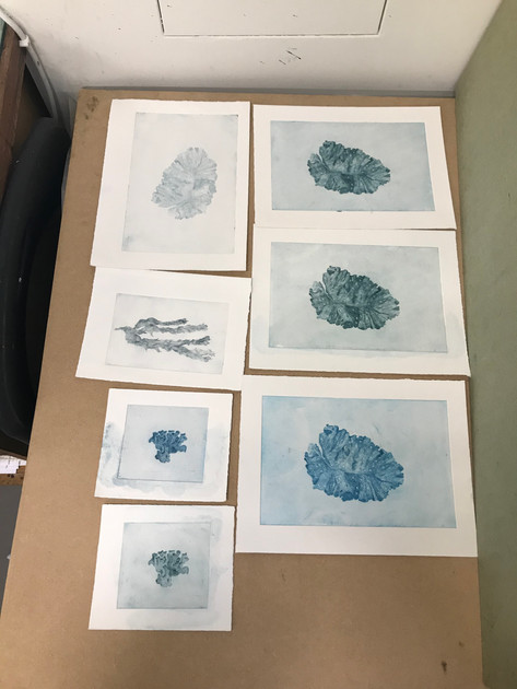 Dry Point illustrated seaweeds