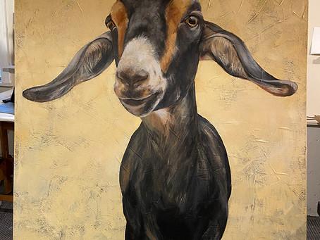 Last Goats of 2020