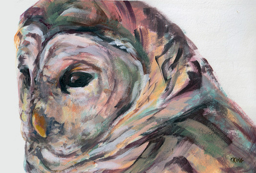 July Barred Owl