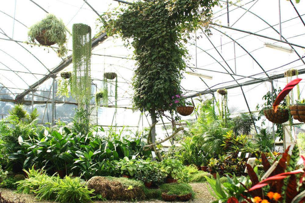 Botanical and plant-based goodness!