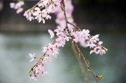 Japon_36