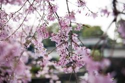 Japon_37