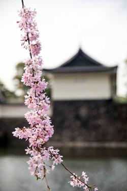 Japon_38