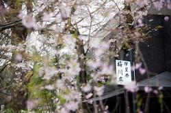 Japon_132