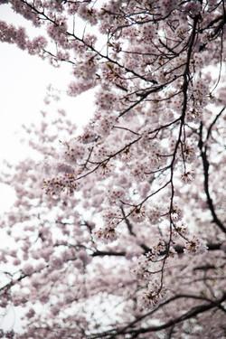 Japon_158